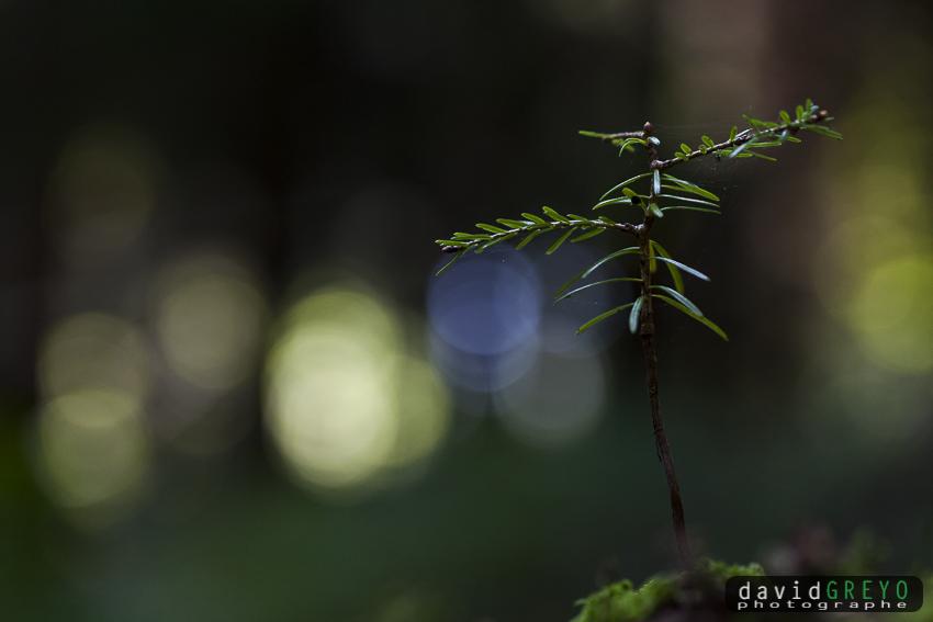 _MG_9492