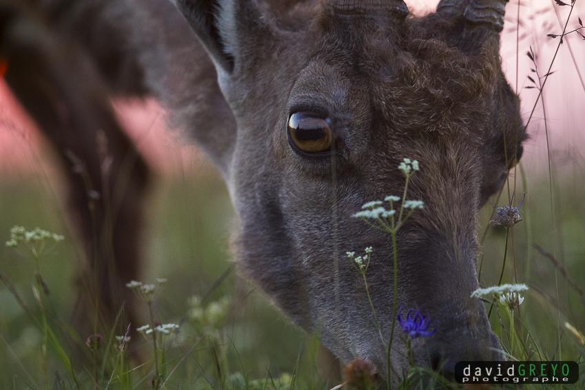t'as de beaux yeux #onpeutpasplusprès #Suisse #bouquetin