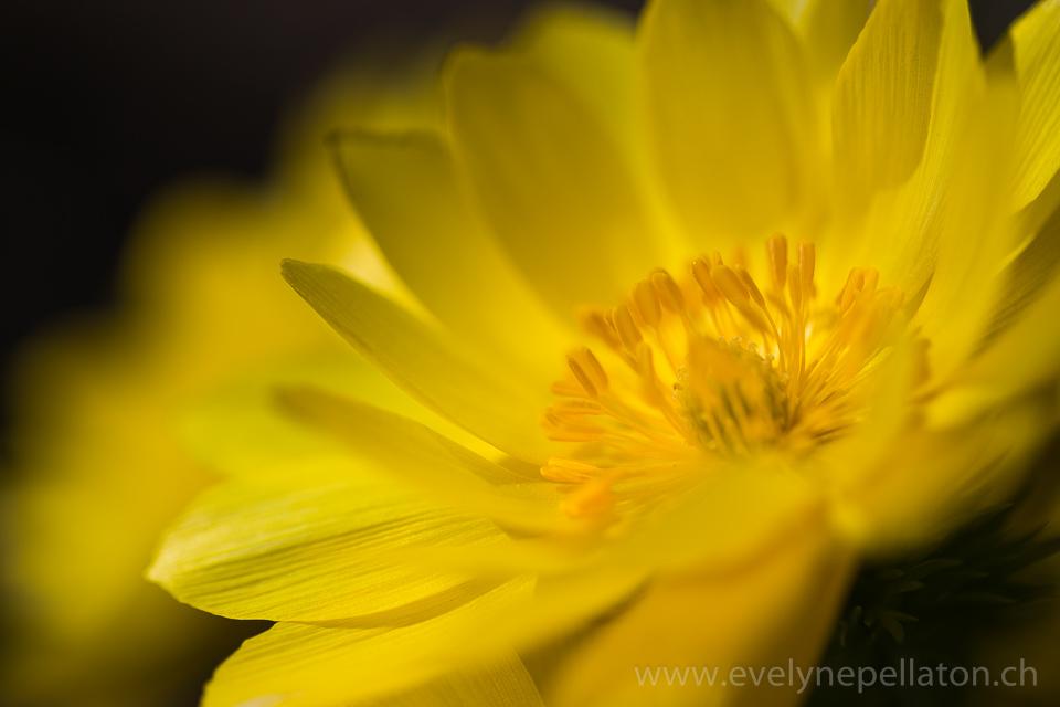 2015.04.08_Divers jaunes__MG_3841
