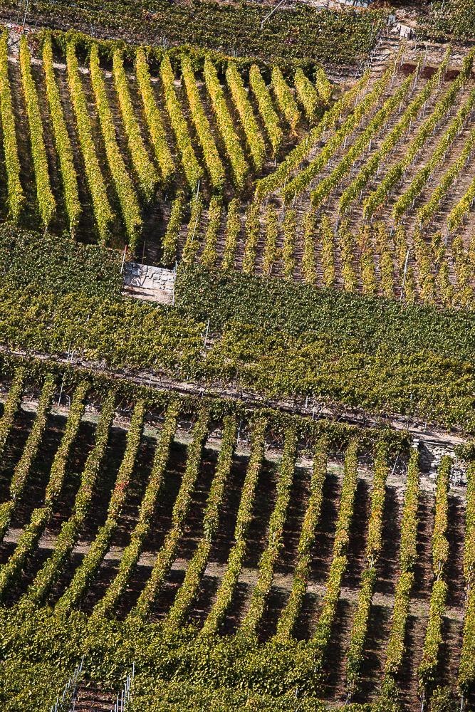 2018.10.10_Mosaïque de vignobles__MG_1890