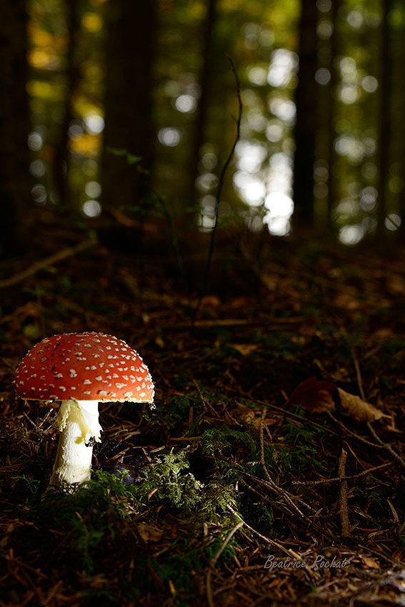 stage-champignons-oct2015-D-rochat