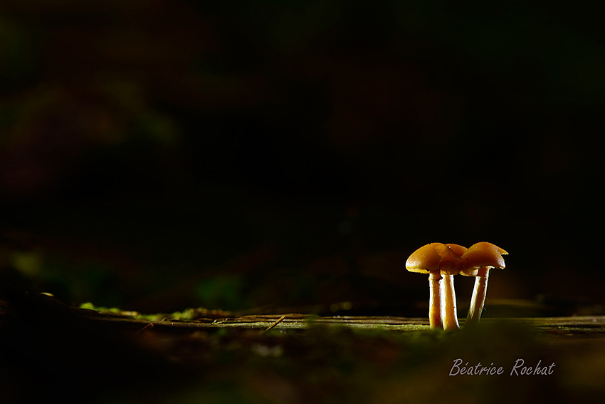 stage-champignons-oct2015-E-rochat