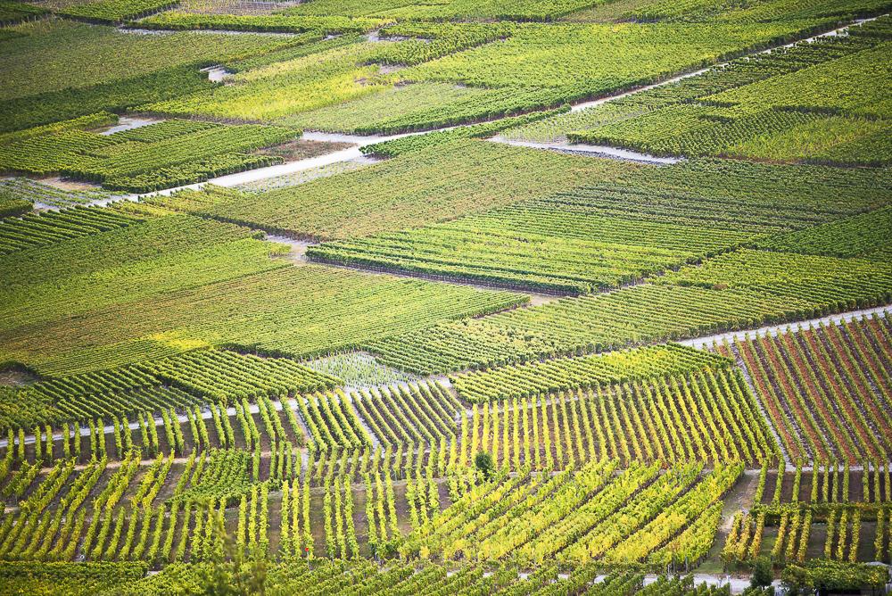 stage-vignes-du-Valais-