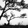 2014.09.10_Silhouette_Ikebana_Creux-du-Van__MG_3071