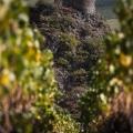 2018.10.10_Tour entre les vignes__MG_1895