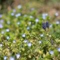 Jardin-botanique-4
