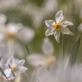 Narcisse-3