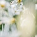 Narcisse-4