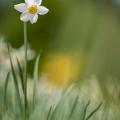 Narcisse-5