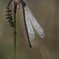 lac du brennet libellule-8682