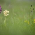niremont orchidées-5899