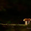 stage-champignons-oct2015-E-rochat