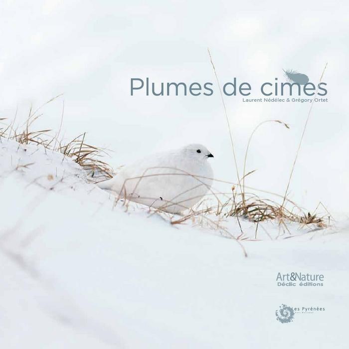 plume-cime-2-bis