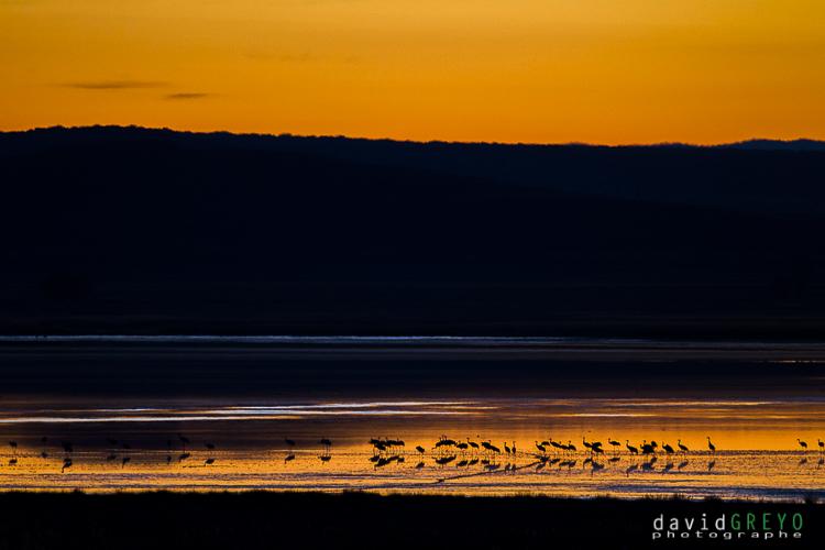 Coucher de soleil sur la lagune de Gallocanta